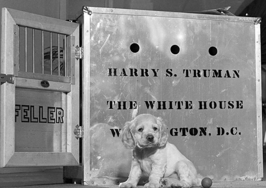 """If You Need a Friend in Washington–Get aDog"""